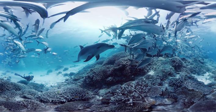 Plongez sous les océans en réalité virtuelle avec la Cité de l'Océan